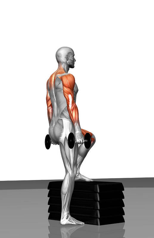 Vertical Art Print featuring the photograph Dumbbell Step-up Exercise (part 2 Of 2) by MedicalRF.com