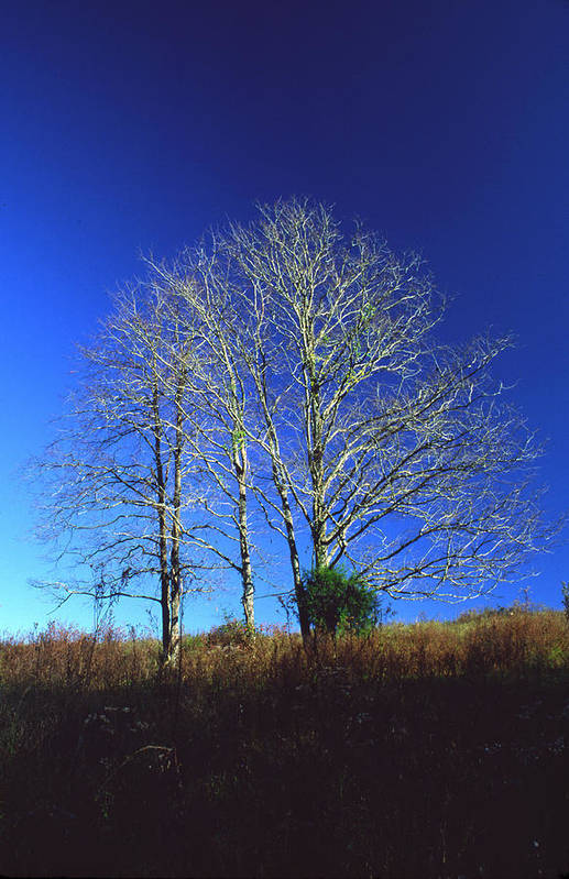 Landscape Art Print featuring the photograph Blue Tree in Tennessee by Randy Oberg