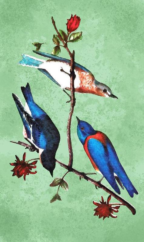 Art Art Print featuring the drawing Warbler And Bluebirds 1 by Francis G. Mayer