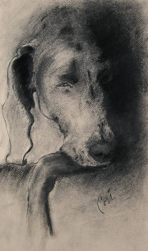 Weimaraner Art Print featuring the drawing Silhouette by Cori Solomon