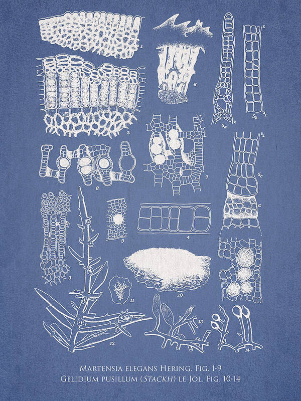 Algae Art Print featuring the drawing Salwater Algae by Aged Pixel