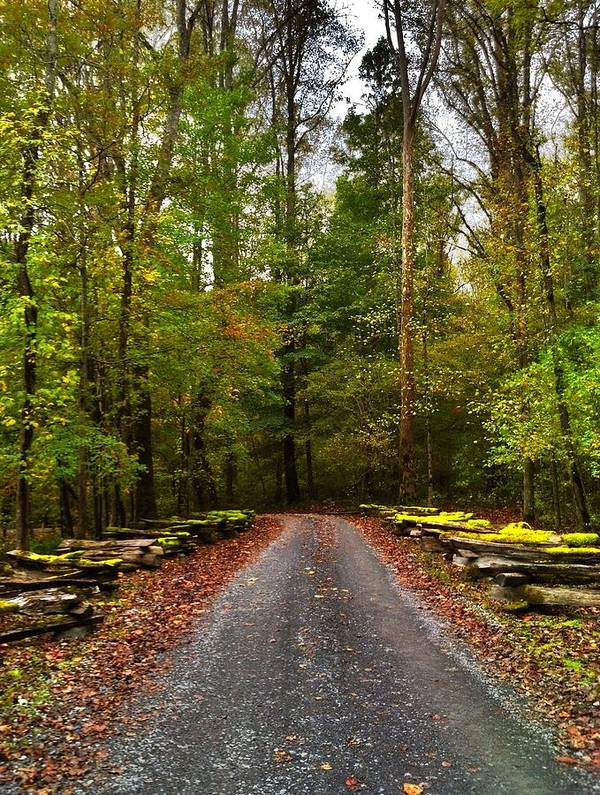 Trail Art Print featuring the photograph Great Smoky Mountains by Janice Spivey