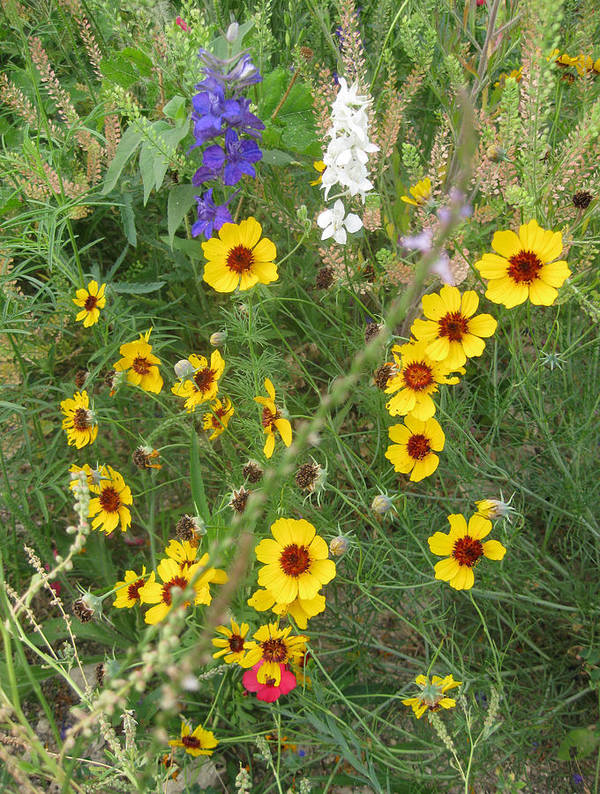 Wildflowers Art Print featuring the photograph A Field Bouquet by Cindy Clements