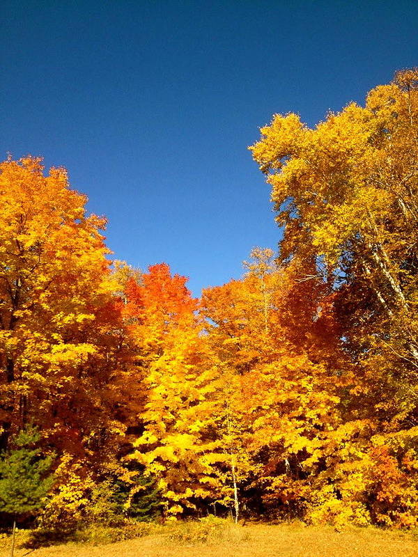 Minnesota Art Print featuring the photograph An Autumn Of Gold by Danielle Broussard