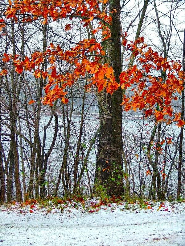Autumn Leaves Art Print featuring the photograph Autumn In Winter by Julie Dant