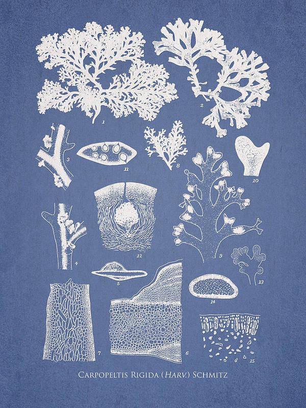 Algae Art Print featuring the digital art Carpopeltis Rigida by Aged Pixel