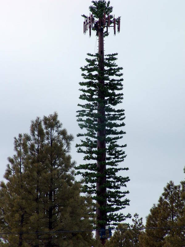 Cell Tower Art Print featuring the photograph Cell Tower Camouflage by Jeri lyn Chevalier
