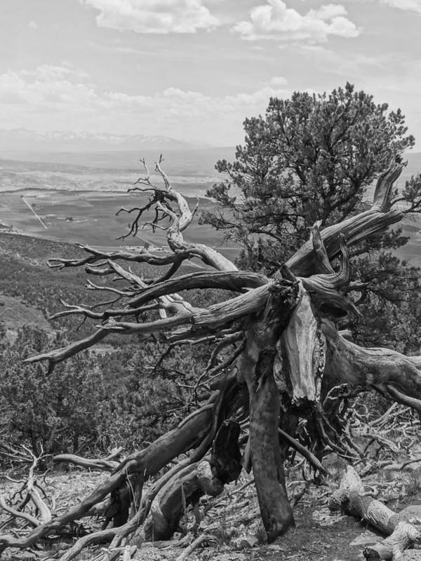 Black And White Art Print featuring the photograph Disfigured Tree by Dan Sproul
