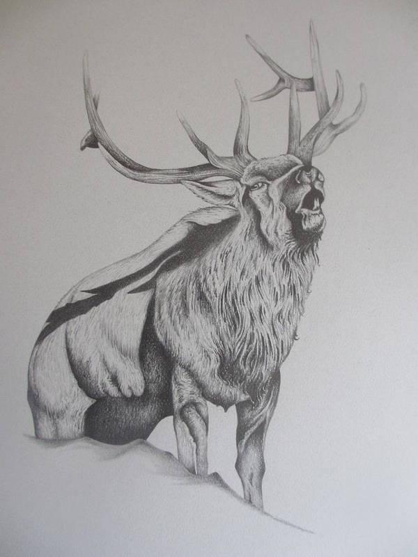 Mountain Elk Art Print featuring the drawing Elk by Pete Garcia