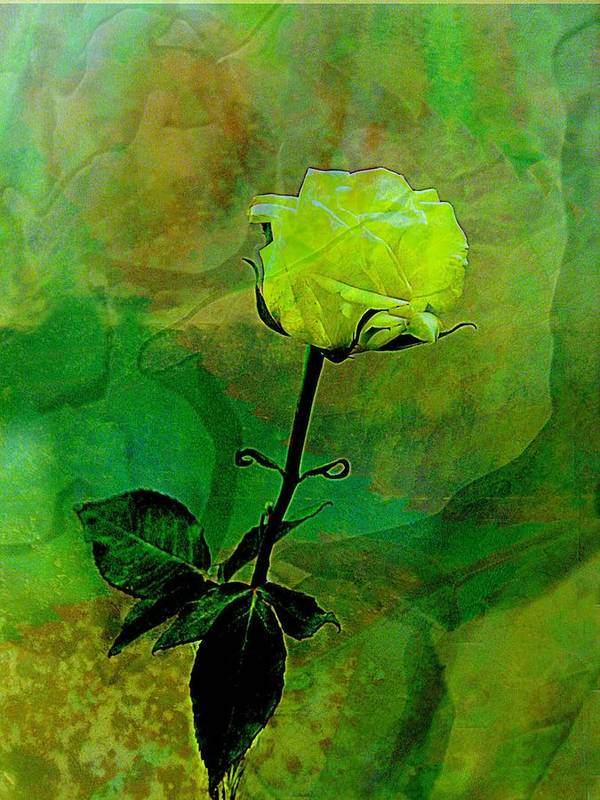 Rose Art Print featuring the photograph Enduring Yellow Rose by Shirley Sirois
