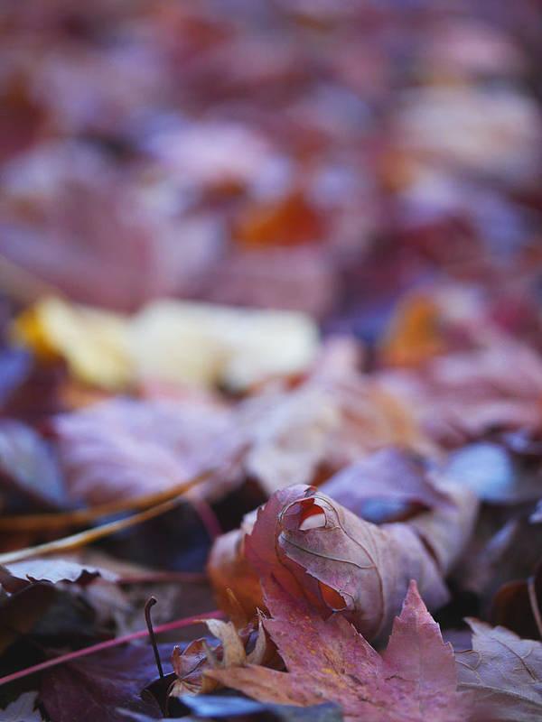 Foliage Fine Art Photo Print featuring the photograph Fallen Leaves Road by Irina Wardas