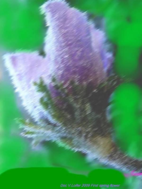 Landscape Art Print featuring the digital art First Spring Flower by Dr Loifer Vladimir