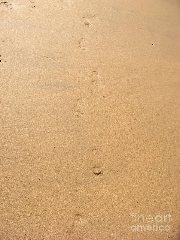 Footprints Art Print featuring the photograph Footprints In The Sand by Pixel Chimp