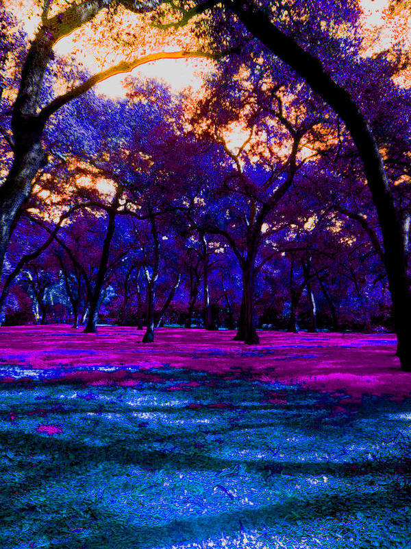 Landscape Art Print featuring the photograph Forever And A Day by Candice Riddle