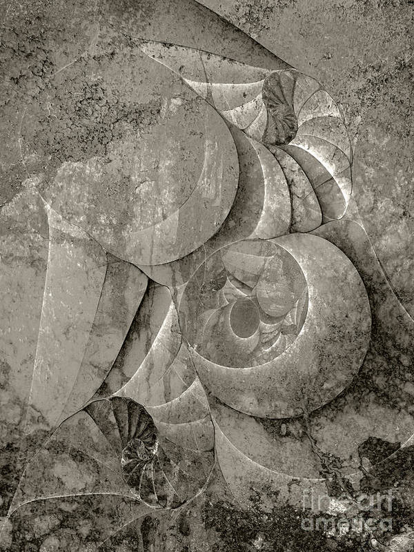Fossilized Shell Art Print featuring the digital art Fossilized Shell - B And W by Klara Acel