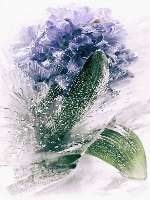 Ice Art Print featuring the photograph Frozen Blue by Margit Lisa Roeder