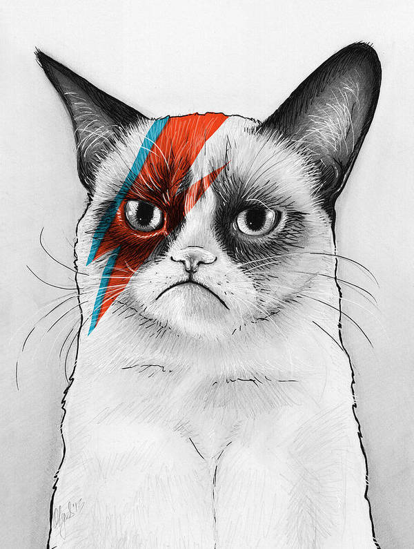 Grumpy Cat Print featuring the drawing Grumpy Cat As David Bowie by Olga Shvartsur