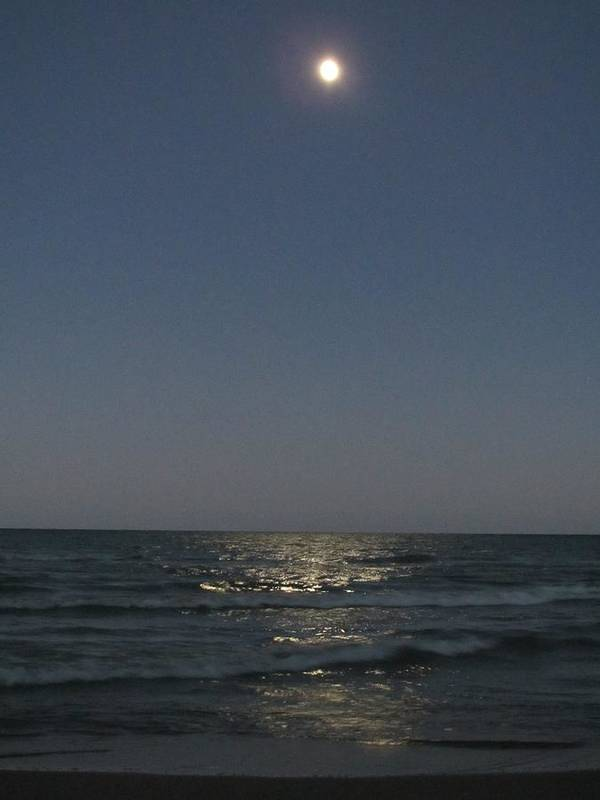 Blue Art Print featuring the photograph Harvest Moonrise by Denise  Hoff