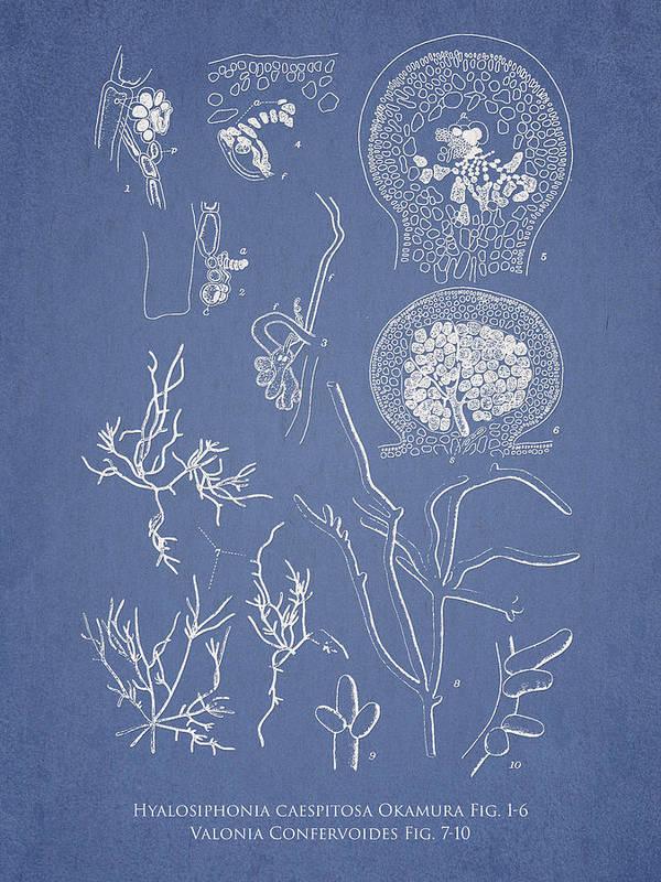 Algae Art Print featuring the digital art Hyalosiphonia Caespitosa Okamura Valonia Confervoides by Aged Pixel