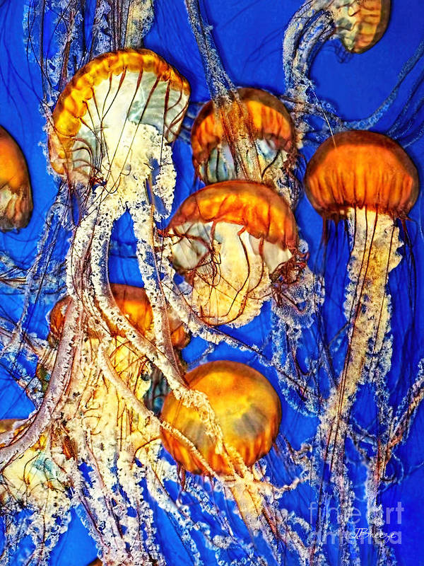 Jellyfish Art Print featuring the photograph Jellywish by Jennie Breeze