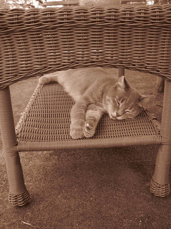 Cat Art Print featuring the photograph Lucy Dreams by Guy Ricketts
