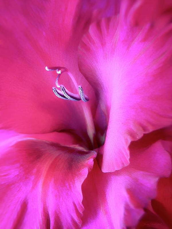 Gladiola Art Print featuring the photograph Magenta Splendor Gladiola Flower by Jennie Marie Schell
