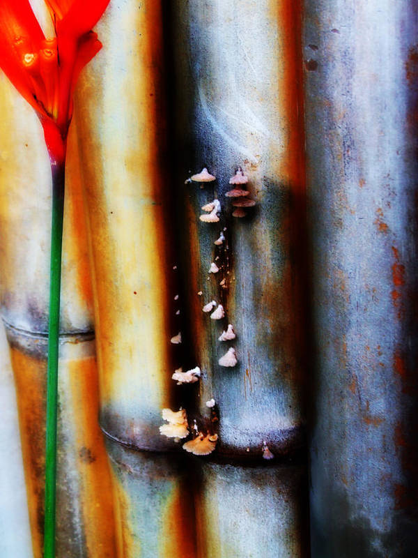 Bamboo Art Print featuring the photograph Mushroom On Bamboo 2 by Lyle Barker