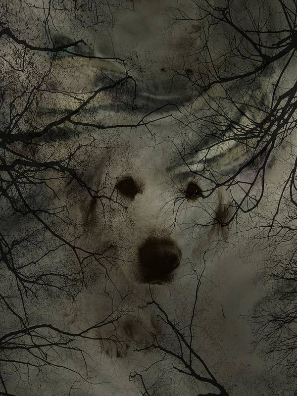 Dog Print featuring the photograph Phantom Dog by Shirley Sirois