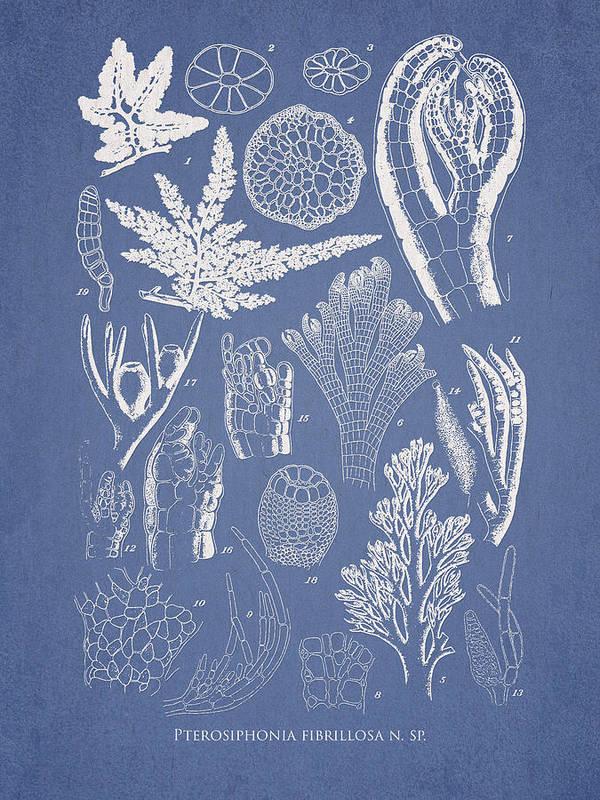Algae Art Print featuring the digital art Pterosiphonia Fibrillosa by Aged Pixel