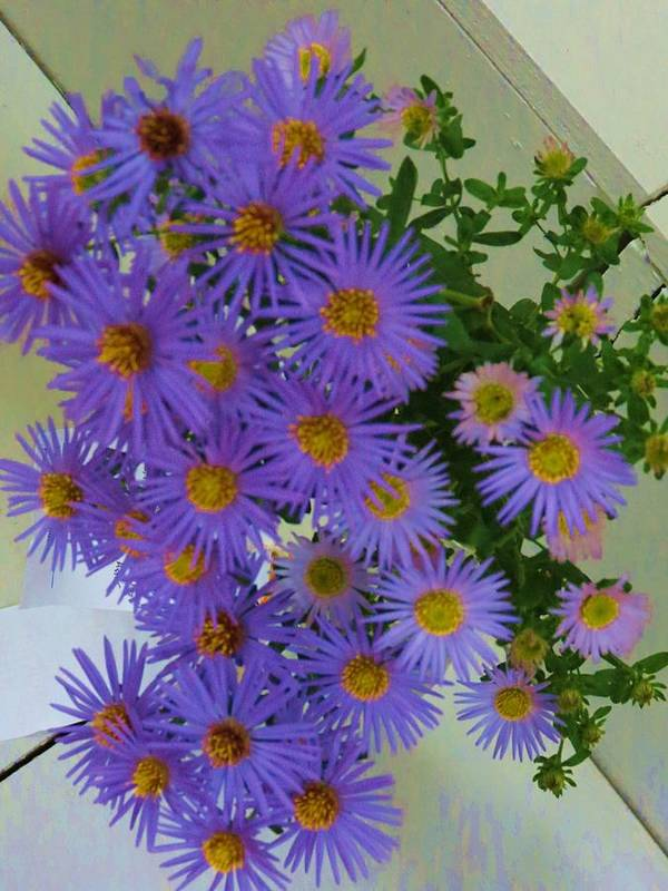 Flower Art Print featuring the photograph Purple by Vijay Sharon Govender