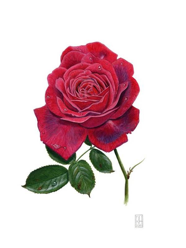Rose Art Print featuring the painting Rose 1 by Richard Harpum