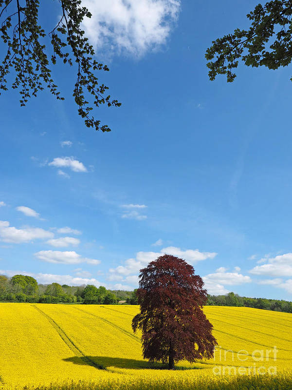 Landscape Art Print featuring the photograph Rural Hampshire 2 by Alex Cassels