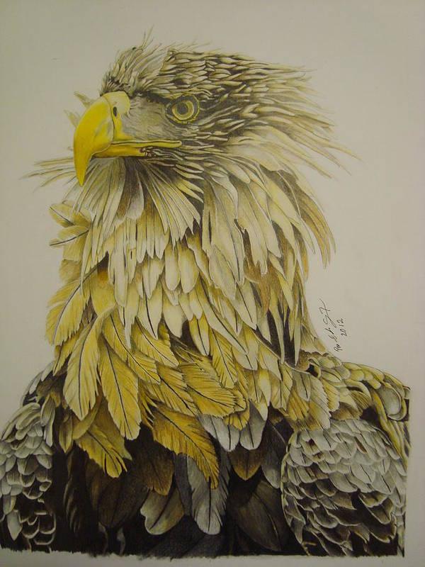 Birds Art Print featuring the drawing Seaeagel by Per-erik Sjogren