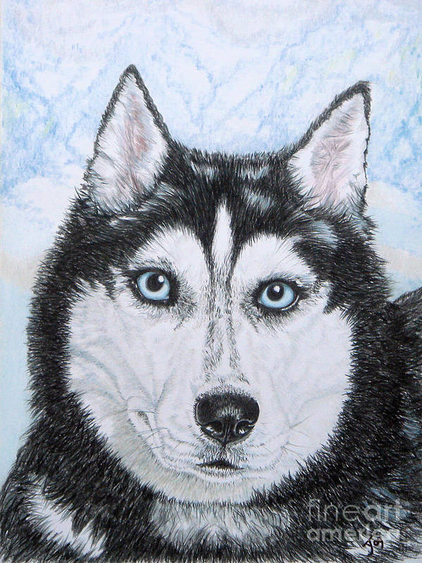 Siberian Husky Print featuring the drawing Siberian Husky by Yvonne Johnstone