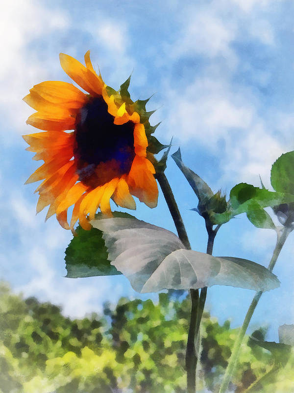 Sunflower Print featuring the photograph Sunflower Against The Sky by Susan Savad