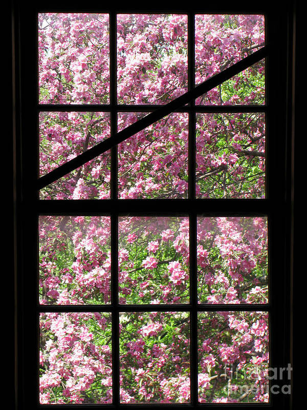 Window Art Print featuring the photograph Through An Old Window by Olivier Le Queinec