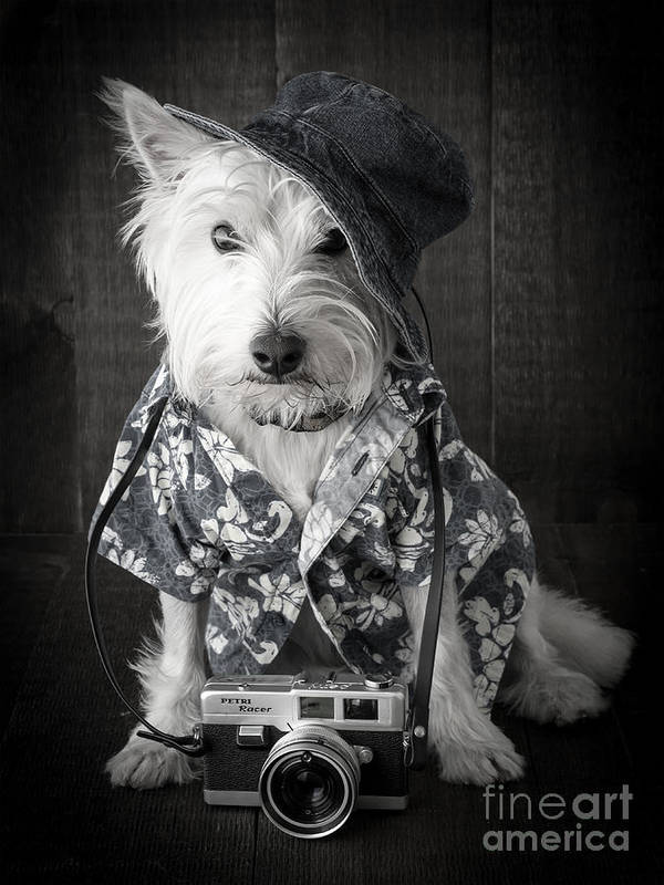 Vacation Art Print featuring the photograph Vacation Dog With Camera And Hawaiian Shirt by Edward Fielding