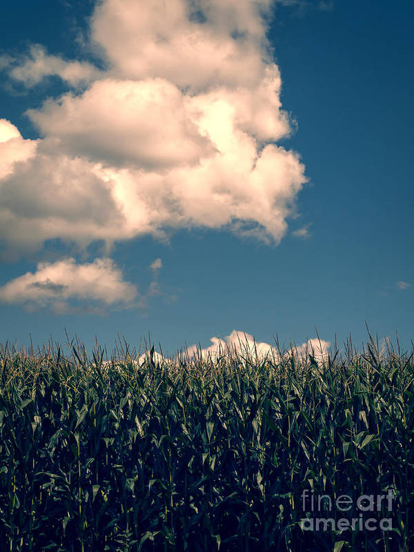 Cloud Art Print featuring the photograph Vermont Cornfield by Edward Fielding