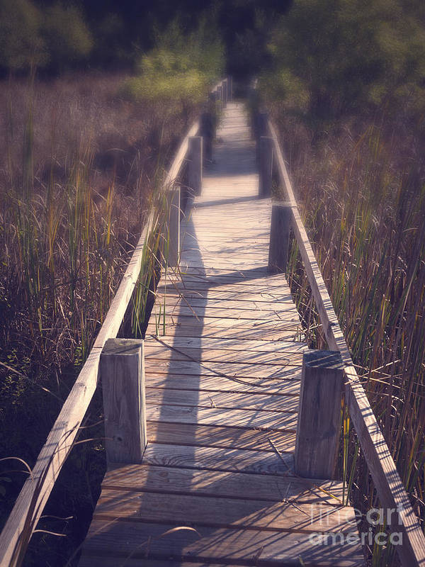 Appalachian Trail Art Print featuring the photograph Walkway Through The Reeds Appalachian Trail by Edward Fielding