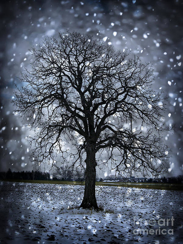 Lonely Print featuring the photograph Winter Tree In Snowfall by Elena Elisseeva