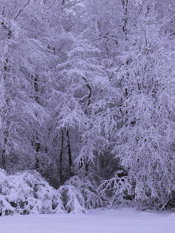 Winter Scene Art Print featuring the photograph Winter Wonderland 1 by Mike McGlothlen