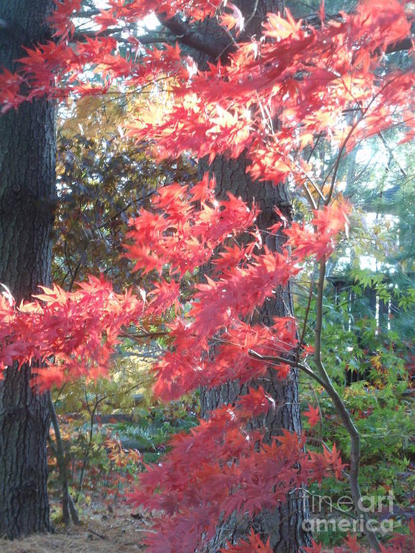 Nature Art Print featuring the photograph Fall Splendor by Valia Bradshaw