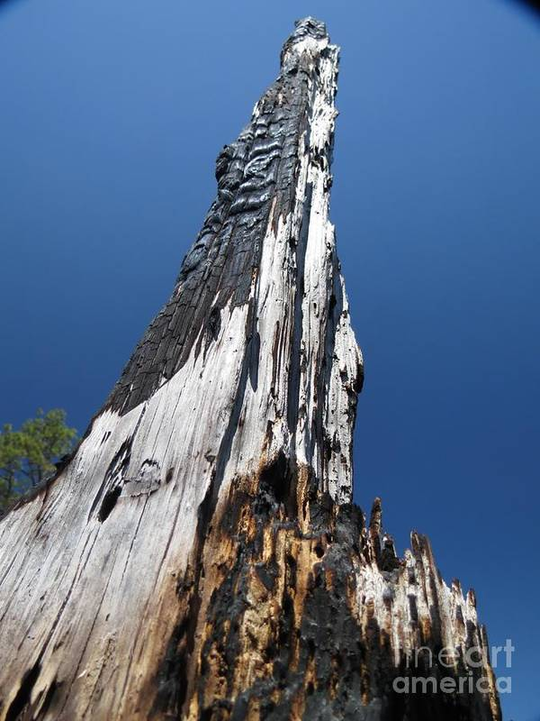 Tree Art Print featuring the photograph Burnt Tree V by Rrrose Pix
