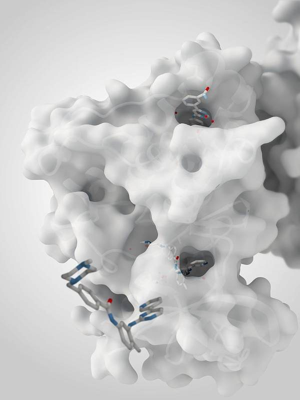 Molecule Art Print featuring the photograph Cancer Protein And Drug Complex by Ramon Andrade 3dciencia