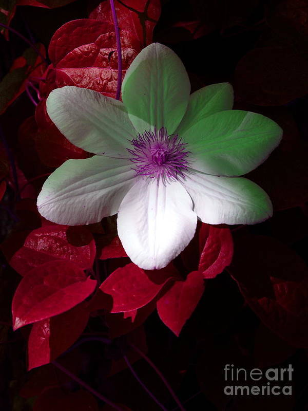 White Flower Print featuring the photograph Christmas Cheer by Joyce Hutchinson