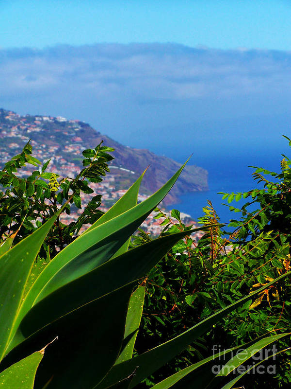Madeira Art Print featuring the photograph Cliffs Of Madeira by Patricia Land