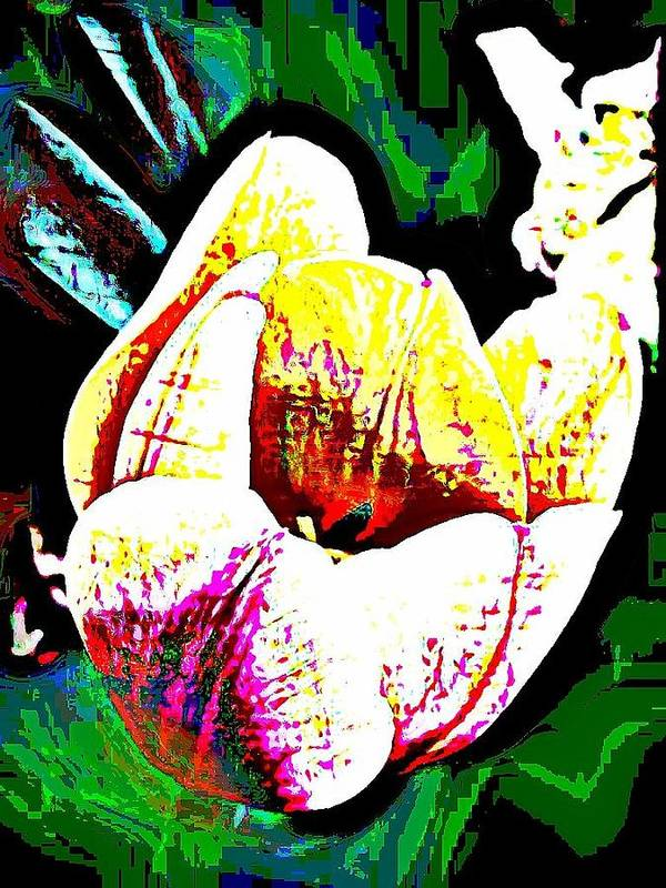 Tulip Art Print featuring the photograph Colorful Tulip by Vickie Beasley
