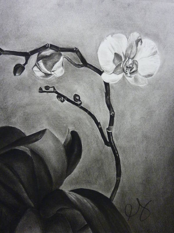 Orchid Art Print featuring the drawing Galen's Orchid by Estephy Sabin Figueroa