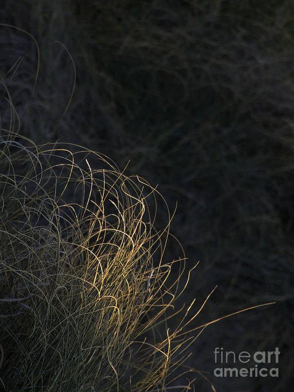 Grass Art Print featuring the photograph Grass by Mary Attard