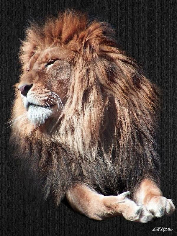 Lions Art Print featuring the digital art His Majesty by Bill Stephens